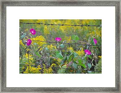 Upon The Fence Framed Print by Brittany H