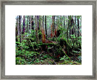 Very Old Forest Framed Print by Anne Havard