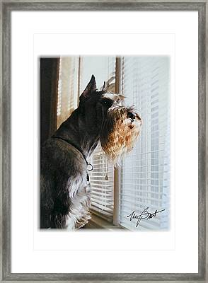 Waiting At The Window Framed Print by Maxine Bochnia