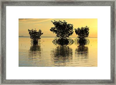We Three Trees Framed Print