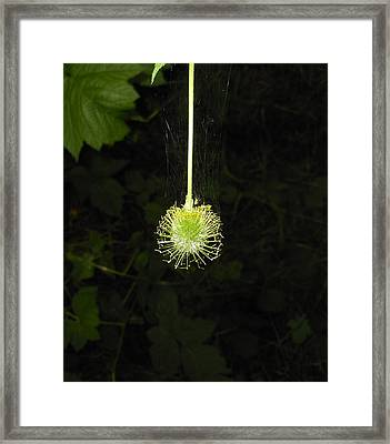 Web Weaver Framed Print by Ken Day
