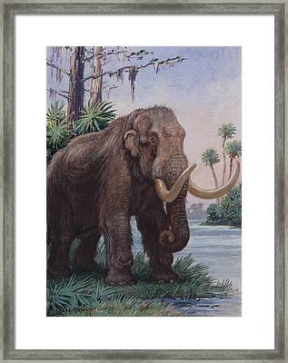 When The Age Of Man Began, The Mastodon Framed Print by Charles R. Knight
