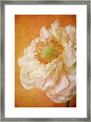 White Double Poppy Framed Print