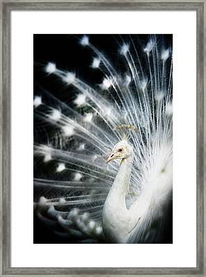 White Peacock Framed Print by Copyright (c) Richard Susanto
