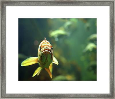 Why The Sad Face Framed Print by by Jun Aviles