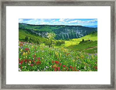Wild Flowers Blooming On Mount Rainier Framed Print by Feng Wei Photography