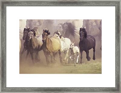 Wild Horses Running Framed Print by John Foxx