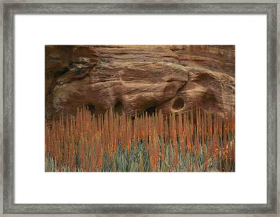 Wildflowers In The Desert Land Of Petra Framed Print by Annie Griffiths
