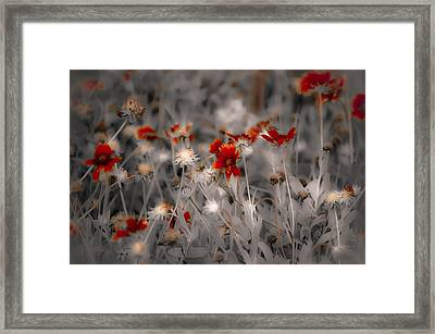 Wildflowers Of The Dunes Framed Print by DigiArt Diaries by Vicky B Fuller