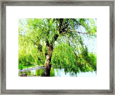 Willow Over Pond Framed Print