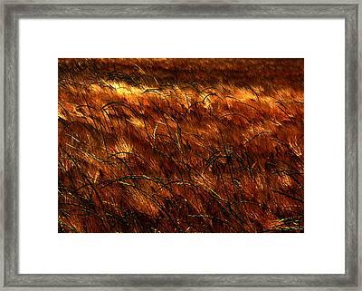 Windblown Framed Print by Jessica Brawley