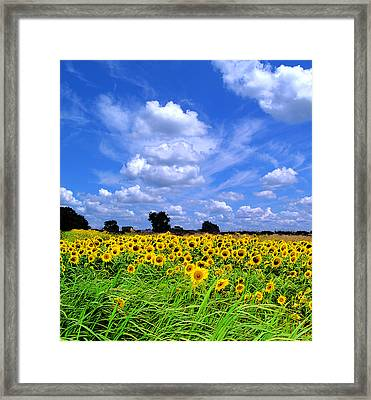 Windswept Field And Sky Framed Print