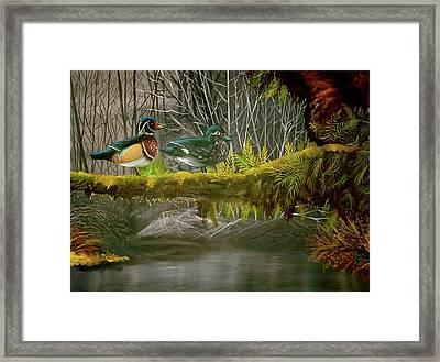 Wood Duck Love Framed Print by Julie McDoniel