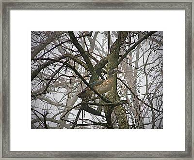 Wood Duck Framed Print by Sue Stefanowicz