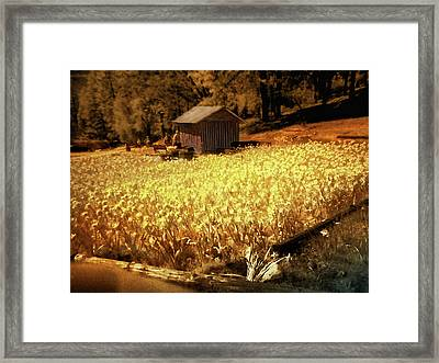 Yellow Daffodil Field Framed Print