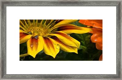 Yellow Drops Framed Print