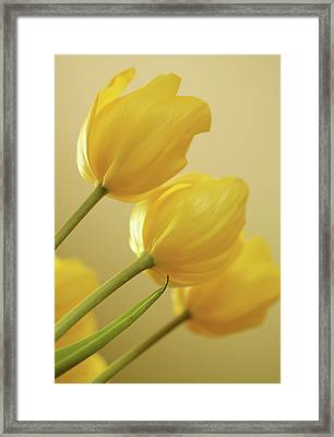 Yellow Tulip Trio Framed Print by Bonnie Bruno