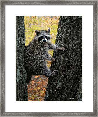 You Looking At Me Framed Print