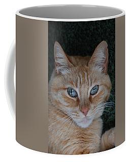 Fat Cats Of Ballard 5 Coffee Mug