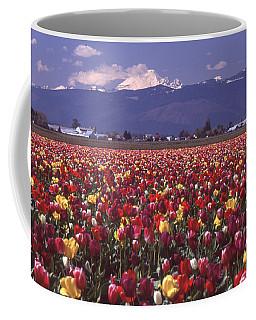 Field Of Tulips And Mount Baker Coffee Mug