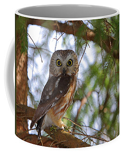 Saw-whet Owl Coffee Mug