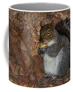 Coffee Mug featuring the photograph Squirrell by Pedro Cardona