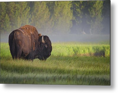 Yellowstone Metal Prints