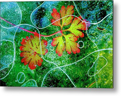 Alga Metal Prints
