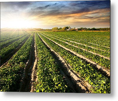 Fertilize Metal Prints