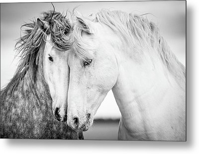 Equine Metal Prints