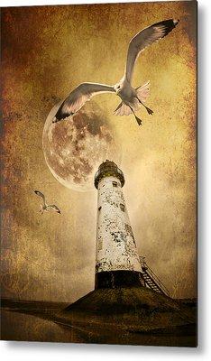Flying Seagull Metal Prints