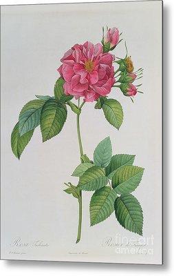 Roses Drawings Metal Prints
