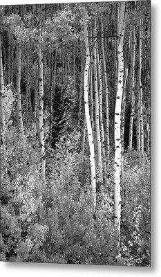 Metal Print featuring the photograph  Aspen Autumn  by Eric Rundle
