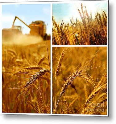 Collage Fields And Grain Metal Print by Boon Mee
