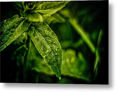 Metal Print featuring the photograph  Morning Dew by Jason Naudi Photography