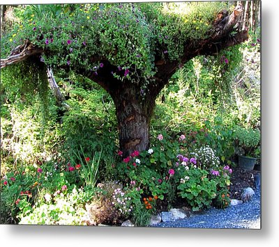 Metal Print featuring the photograph  Upside Down Tree by Jennifer Wheatley Wolf