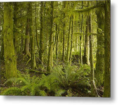 A Lush Forest Tofino British Columbia Metal Print by Ian Grant