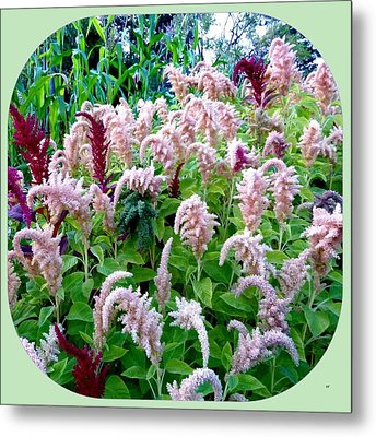 Amaranth Metal Print by Will Borden