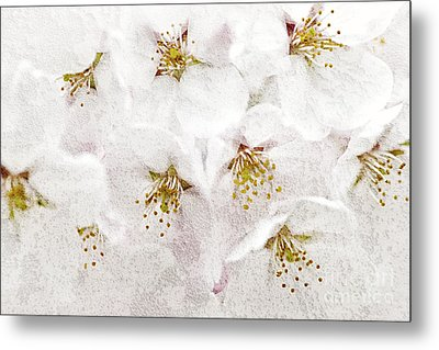 Apple Blossoms Metal Print by Elena Elisseeva