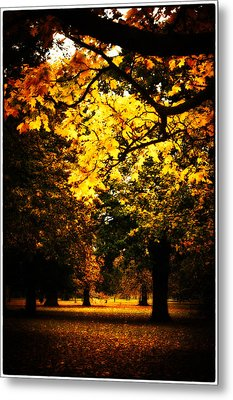 Autumnal Walks Metal Print by Lenny Carter