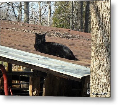 Metal Print featuring the photograph Cat On A Tin Roof by Wendy Coulson