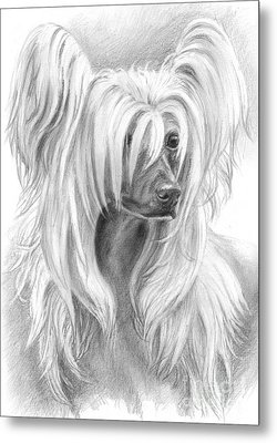 Chinese Crested Metal Print by Tobiasz Stefaniak