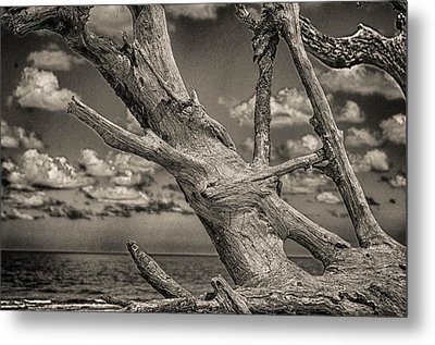 Driftwood Metal Print by J Riley Johnson
