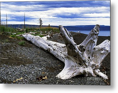 Driftwood On Beach Metal Print by Thomas R Fletcher