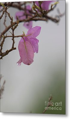 Elegance Of Nature Metal Print by Gary Bridger