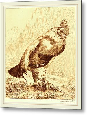 Félix Bracquemond French, 1833-1914, The Old Cock Metal Print