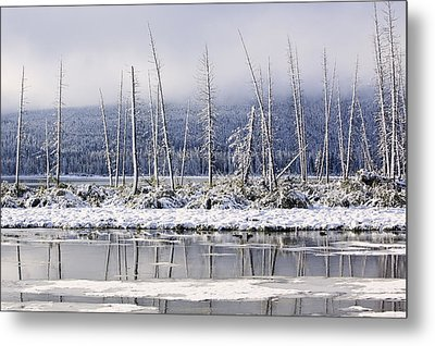 Fresh Snowfall And Bare Trees Metal Print by Ken Gillespie