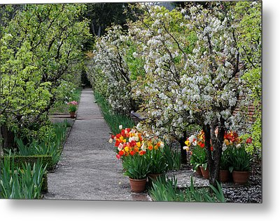 Metal Print featuring the photograph Garden by Haleh Mahbod