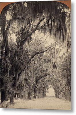 Metal Print featuring the painting Georgia Oak Trees, C1887 by Granger