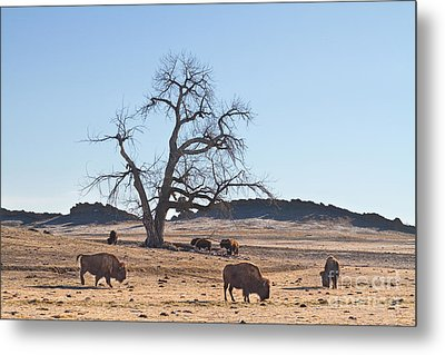 Give Me A Home Where The Buffalo Roam Metal Print by James BO  Insogna